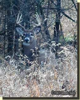 A 10-point buck looked straight at me.