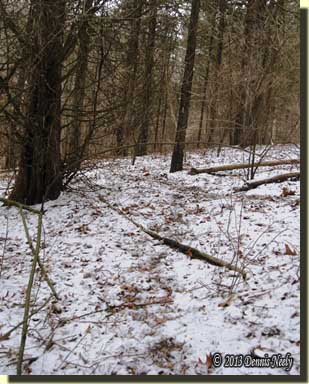 Light snow covers a doe trail.