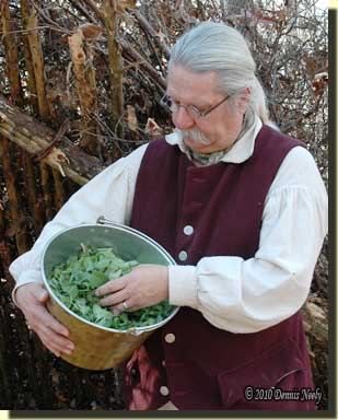 A traditional woodsman with a brass kettle filled with wild mint.