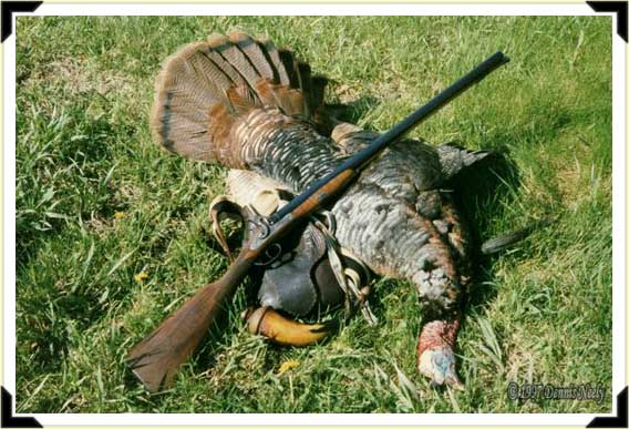 A long-bearded wild turkey with a fine English double barrel percussion shotgun.
