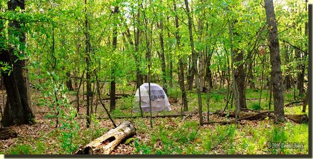 An Ojibwe-style wigwam in a greening forest.