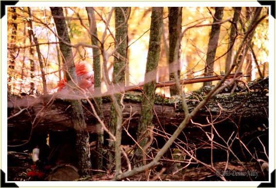 A traditional woodsman sitting in the upper branches of a downed oak top.