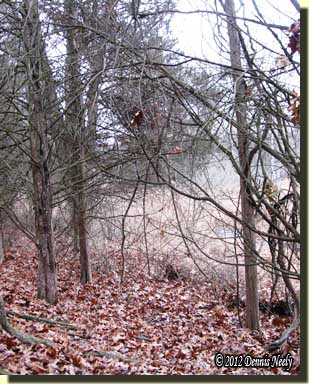 A leaf-covered patch of ground beside the big swamp.