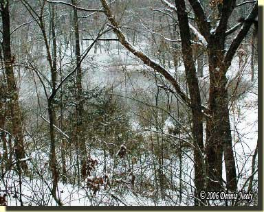 """Winter tames the """"nasty thicket's"""" roughness."""