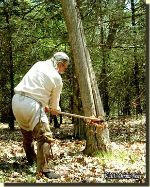 A traditional woodsman cutting a tree with a single bitted ax.