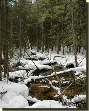The babbling creek, littered with logs and tree tops.