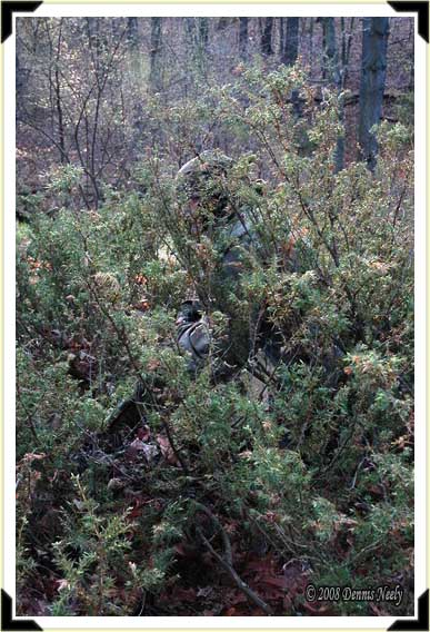 A traditional hunter concealed by a hemlock bush.