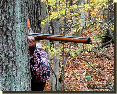 Traditional woodsman aims his Northwest trade gun from behind an oak tree.