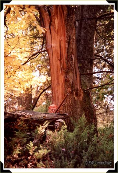 A traditional woodsman sitting against an old red oak split apart by a windstorm.