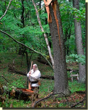 A traditional woodsman looking over a broken red oak trunk.