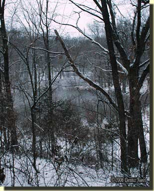 Looking out over the nasty thicket, watching the hillside beyond.