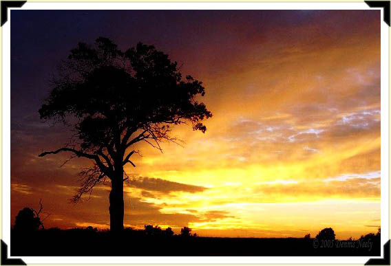 A brilliant sunset on the section oak.