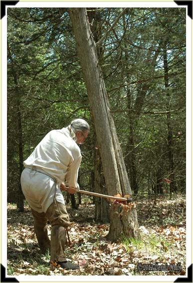 A cedar tree begins to fall as the traditional woodsman's ax bites deep.