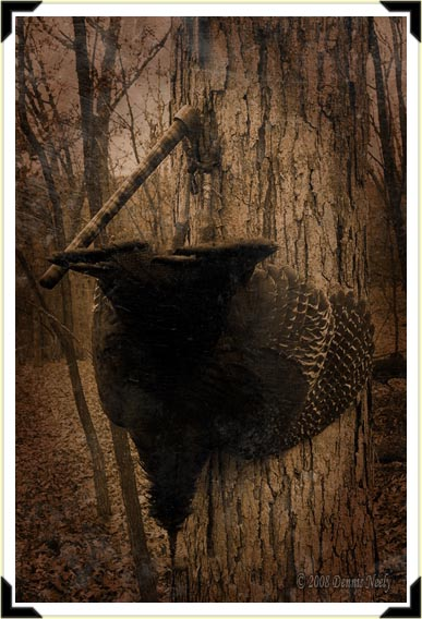 A wild turkey jake suspended from a tomahawk in an oak.