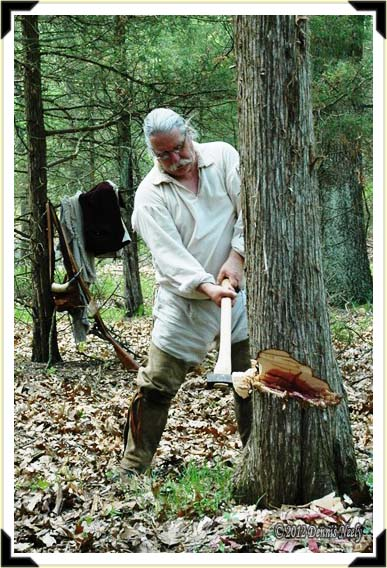 A tradtional woodsman cutting down a red cedar tree for a lean-to shelter.