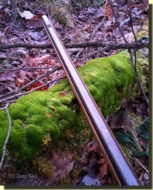 A French fusil's long barrel rests on a moss-covered maple root.