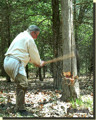 The post hunter swings a felling ax, deepening the cut in a red cedar tree.